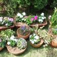 夏の寄せ植え大集合