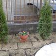 花壇を作る前
