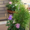秋の寄せ植え(2鉢)