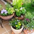 夏の寄せ植えを集めて