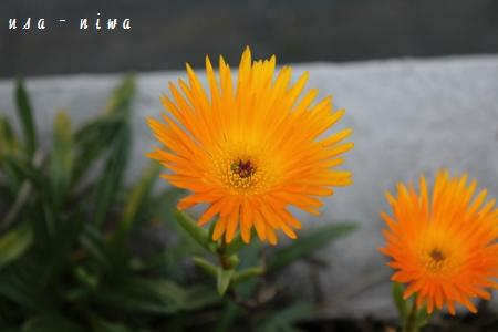 Img_0956_s
